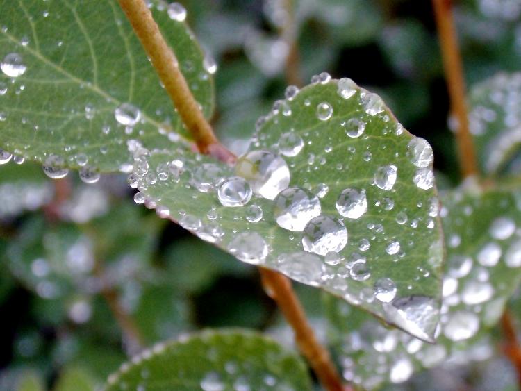 regnregn